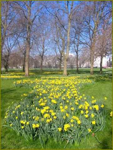 green-park-london-daffodils-spring.jpg