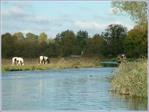 river-wey-near-stoke-lock-guildford.jpg