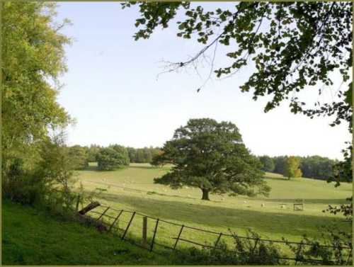 summer-fields-near-great-missenden-buckinghamshire.jpg