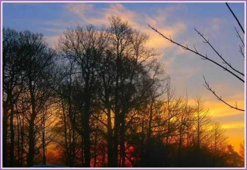 winter-trees-sunset.jpg