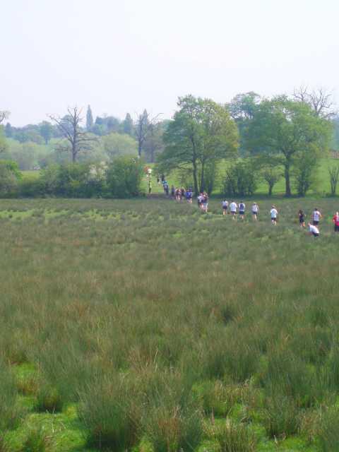 clandon-park-run-10-km-marsh.jpg