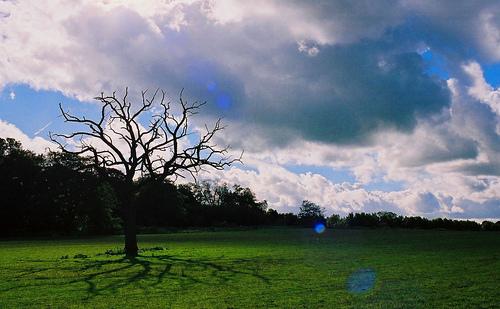 clandon-park-trees-by-moostive.jpg