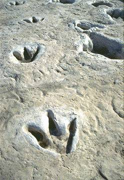 dinosaur-footprints.jpg