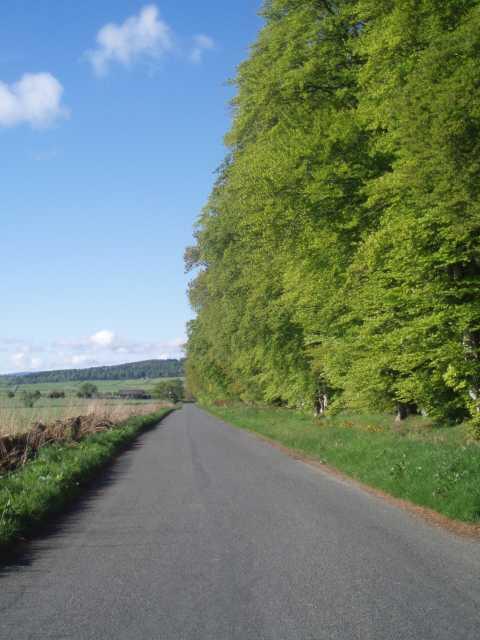 chapel-of-gairloch-aberdeenshire-trees