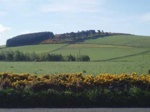 chapel-of-gairloch-hills-aberdeenshire-gorse.jpg