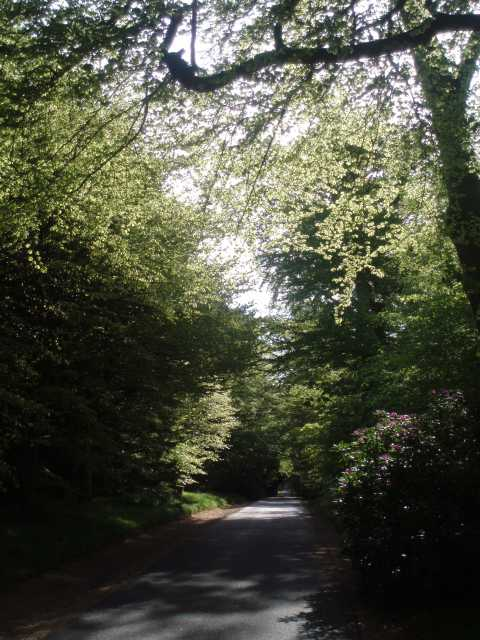 pittodrie-house-aberdeenshire-drive-rhododendrons