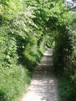 green-tunnel-crunching-flints-rifle-butts-alley-epsom-surrey-england-roadsofstone