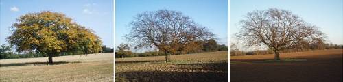 lone-oak-warnham-sussex-england-october-november-december-by-roadsofstone
