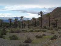 desert-palms-sierra-de-alhamilla-above-pechina-almeria-spain-by-roadsofstone